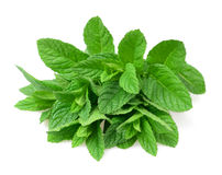 Mint plants Stock Image