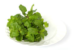 Mint on Plate. Picture isolate Stock Photos