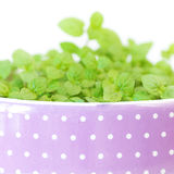 Mint in a pot Royalty Free Stock Images