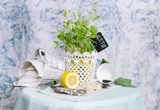 Mint in a pot. Royalty Free Stock Photography