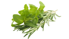 Mint and rosemary. Branches on white background Stock Image