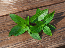 Mint on rustic wooden background Stock Photo