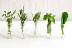 Mint, sage, rosemary, thyme in glass bottles white background stock images