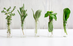 Mint, sage, rosemary, thyme in glass bottles white background royalty free stock image