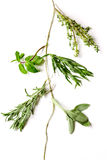 Mint, sage, rosemary, thyme - tufts of herbs white background royalty free stock image