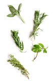 Mint, sage, rosemary, thyme - tufts of herbs white background Royalty Free Stock Images