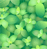 Mint. Seamless Pattern. Stock Photo