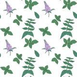 Mint seamless pattern Stock Image
