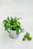 Mint in small basket on natural wooden background, peppermint, s Royalty Free Stock Photography