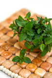 Mint in small basket on natural wooden background, peppermint, s Royalty Free Stock Photos
