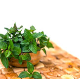 Mint in small basket on natural wooden background, peppermint, s Royalty Free Stock Images