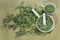 Mint, spearmint. Dry herbs. Herbal medicine, phytotherapy medici. Mint, spearmint. Dry herbs for use in alternative medicine, phytotherapy, spa, herbal cosmetics Royalty Free Stock Photos