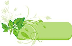 Mint sprig. Decorative banner. Vector illustration Stock Photo