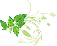 Mint sprig with floral ornament. Vector illustration Royalty Free Stock Photos