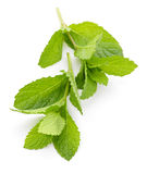 Mint sprigs Royalty Free Stock Photos