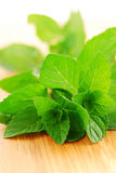 Mint sprigs Stock Image