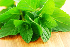 Mint sprigs Royalty Free Stock Photography