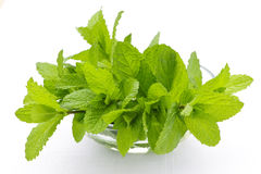 Mint sprigs in bowl Royalty Free Stock Images