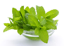 Mint sprigs in bowl Stock Image