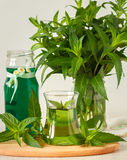 Mint syrup Royalty Free Stock Image