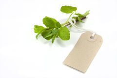 Mint and tag Stock Photo