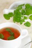 Mint tea. Cup of mint tea with mint royalty free stock images