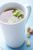 Mint tea. Closeup of herbal tea with fresh mint royalty free stock photography