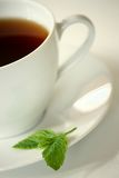 Mint Tea. White cup of tea with a mint leaf royalty free stock image