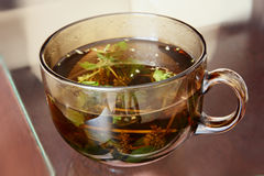 Mint tea cup. Stock Photography