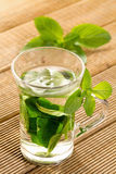 Mint tea with fresh mint leaves Royalty Free Stock Images