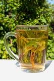 Mint tea in the garden Royalty Free Stock Photos