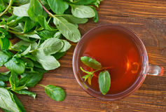 Mint tea. In glass cup stock photo