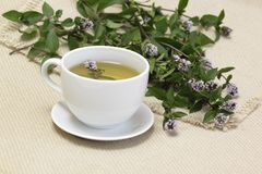 Mint tea  /Mentha aquatica/ Royalty Free Stock Image