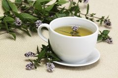 Mint tea  /Mentha aquatica/ Royalty Free Stock Images