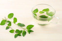Mint tea and mint plants Royalty Free Stock Photography