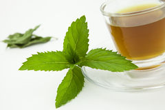 Mint tea on white background. Peppermint tea with fresh leaf around, white background stock photography