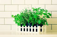 Mint, thyme, basil, parsley - aromatic organic herbs on white kitchen table, brick tile background. Potted culinary. Spice plants. Minimalistic lifestyle stock photos