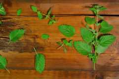 Mint twig on wooden background Stock Photos