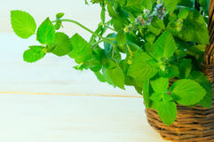 Mint twigs in the basket Stock Image