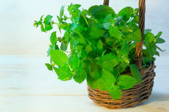 Mint twigs in the basket Stock Images