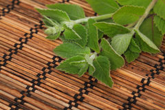 Mint twigs on wooden mat Stock Photography