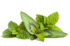 Mint Varieties Isolated Stock Images