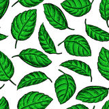 Mint vector drawing seamless pattern. Isolated  plant and leaves Stock Images
