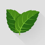 Mint vector leaves Stock Image