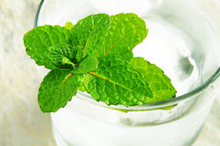 Mint and water stock photography