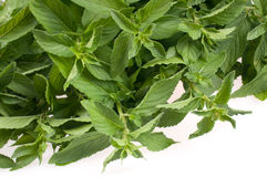 Mint on white background Stock Image