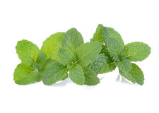 Mint on white background Stock Photography