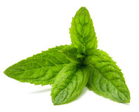 Mint  on white. Stock Images