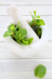 Mint in white marble mortar, Stock Photos