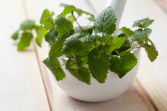 Mint in a white mortar Royalty Free Stock Photos